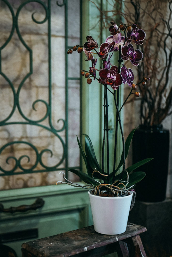orchidee-violette