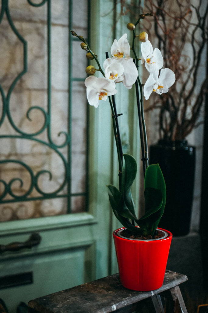 orchidee-blanche
