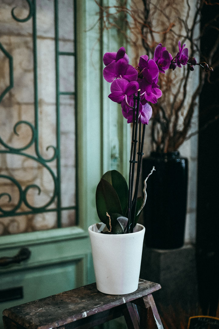 orchidee-violette-2